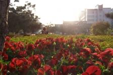 xian_sunset