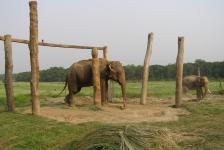 chitwan_national_park_01