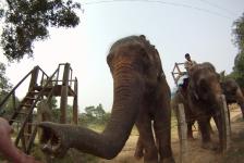 chitwan_national_park_02