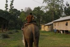 chitwan_national_park_04