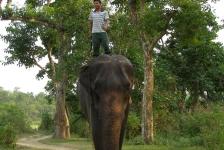 chitwan_national_park_05