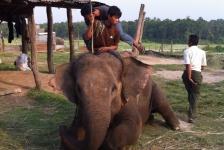 chitwan_national_park_07