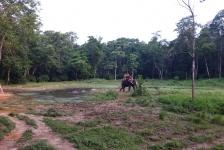 chitwan_national_park_09