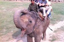 chitwan_national_park_10